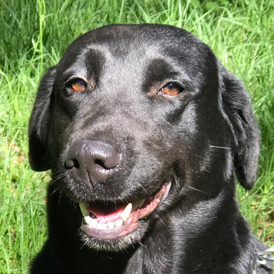 blacklabs/TealbrooksHeadsOrTails.jpg